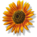 sunflower png icon