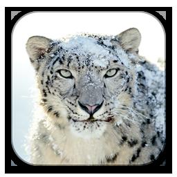 Snow Icons Free Snow Icon Download Iconhot Com