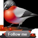 bullfinch png icon