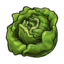 lettuce large png icon