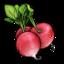 radish large png icon