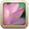 photosalt Png Icon