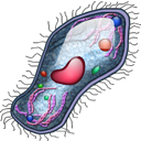 cell 3 png icon