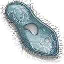 cell 7 png icon