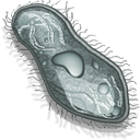 cell 9 png icon