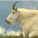 goat 3 png icon