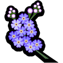 forgetmenot png icon