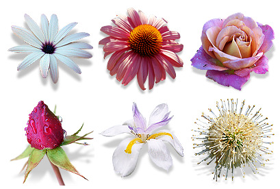 flowers-vol-2 icons thumbnails