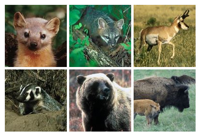 US Fish And Wildlife Service thumbnails